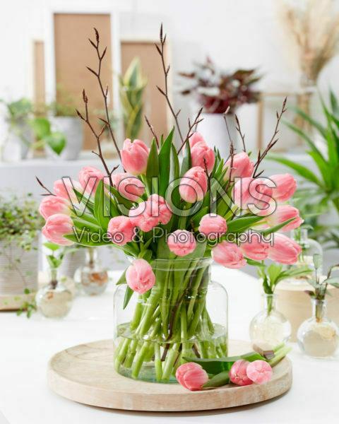 Tulipa Feline bouquet