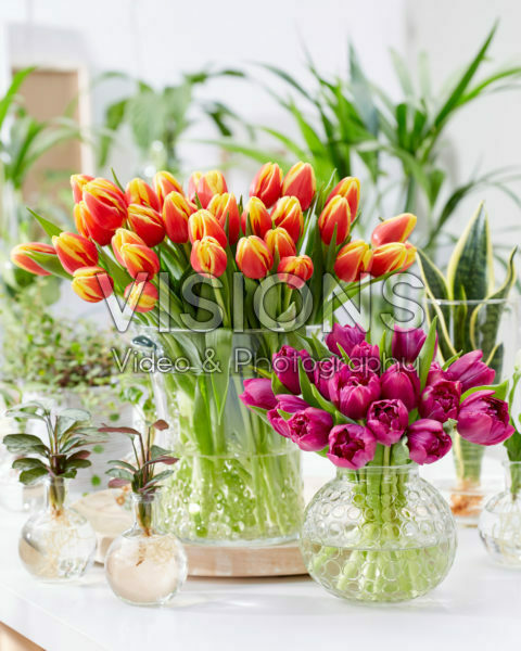 Tulipa boeketten