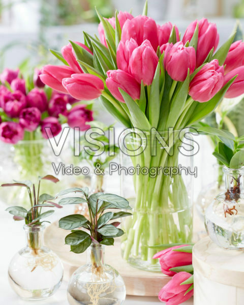 Tulipa Ivanka bouquet