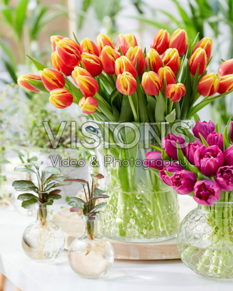 Tulipa Denmark bouquet