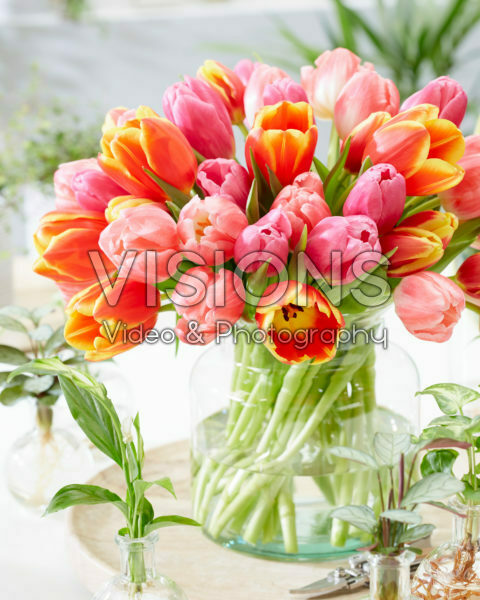 Colourful tulip mix in vase