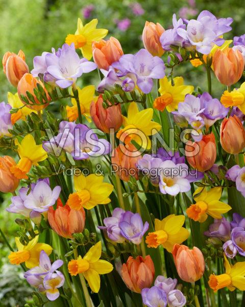 Gemengde voorjaarsbloeiers
