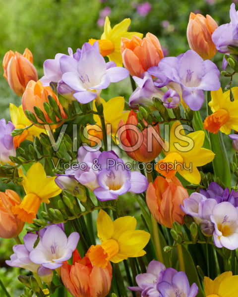 Mixed spring flowers