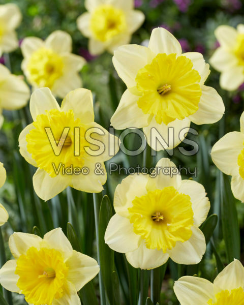 Narcissus Raoul Wallenberg