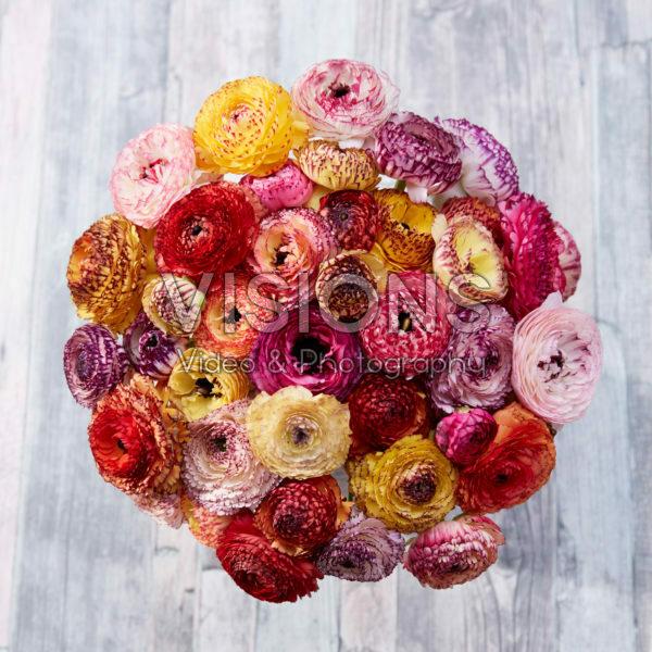 Ranunculus Picotee mix
