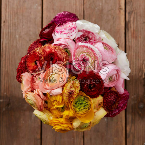 Ranunculus Rainbow mix