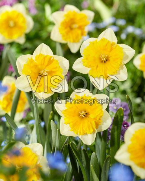 Narcissus Gabriël Kleiberg