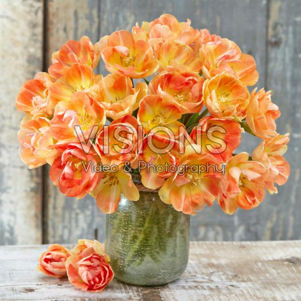 Tulipa Charming Beauty