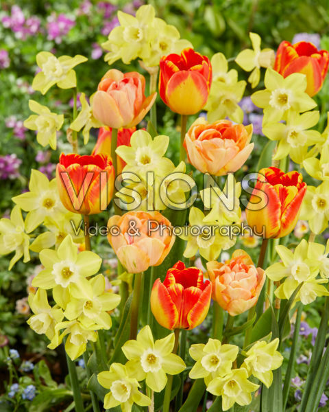 Spring flowers mixed