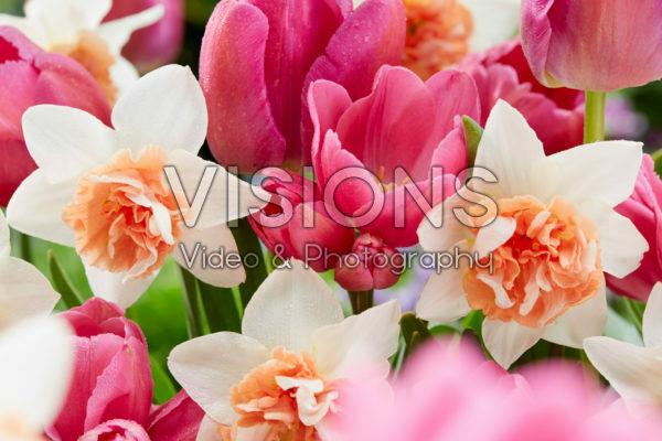 Voorjaarsbloemen mix