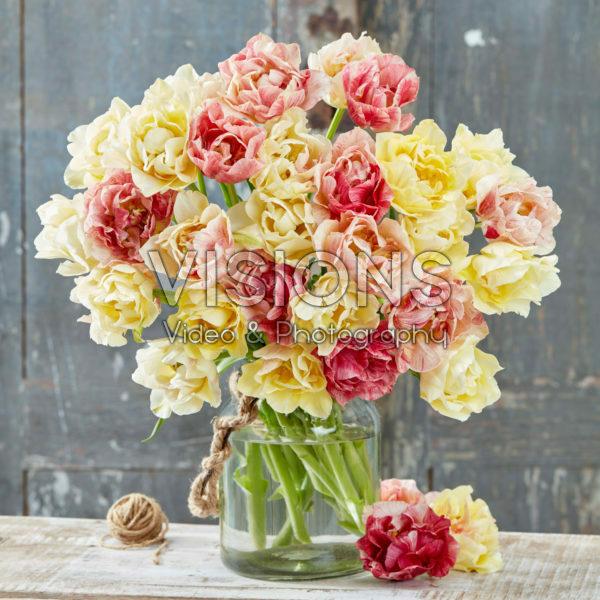 Tulipa Silk Road
