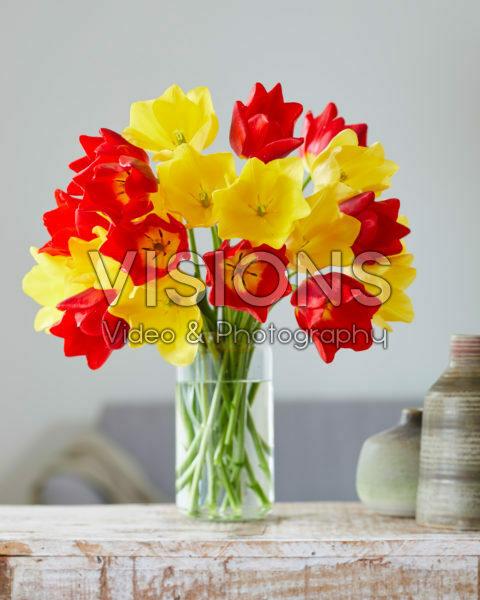 Tulipa Friendship, Friendship in Red mix