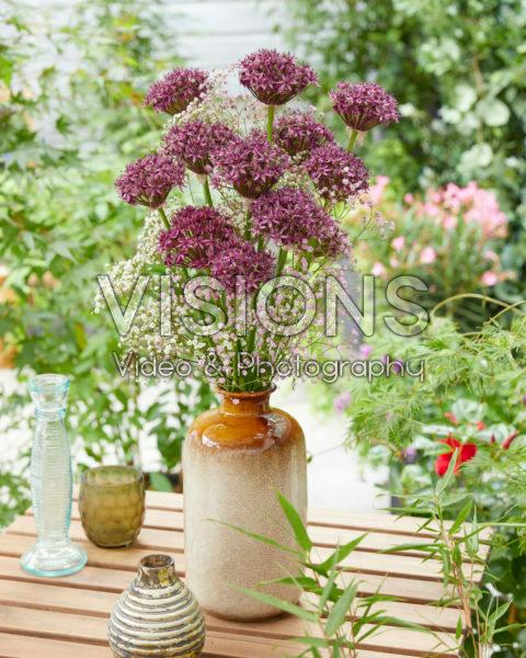 Allium Firmament