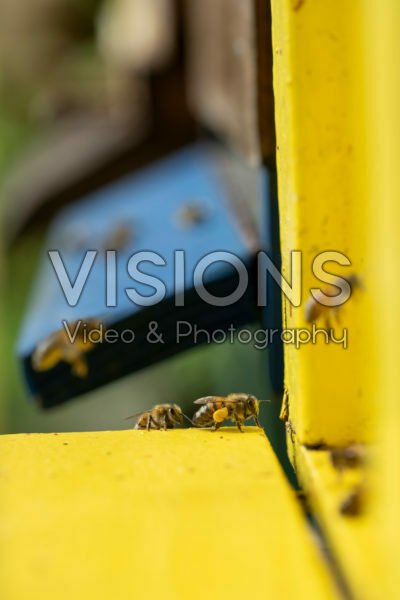 Bee cabinet