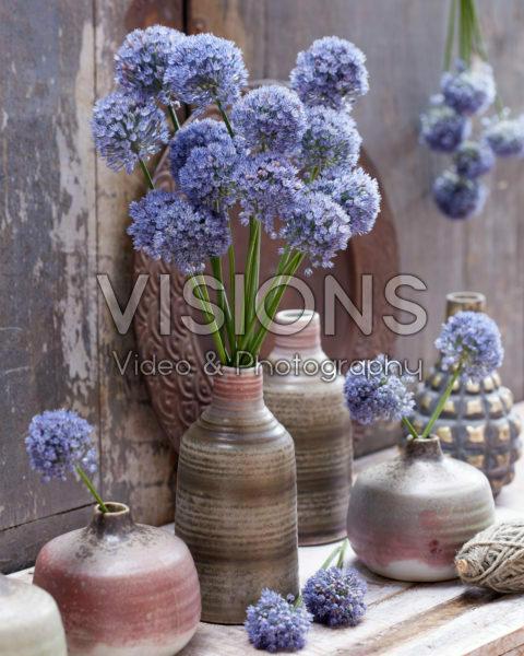 Allium cesium