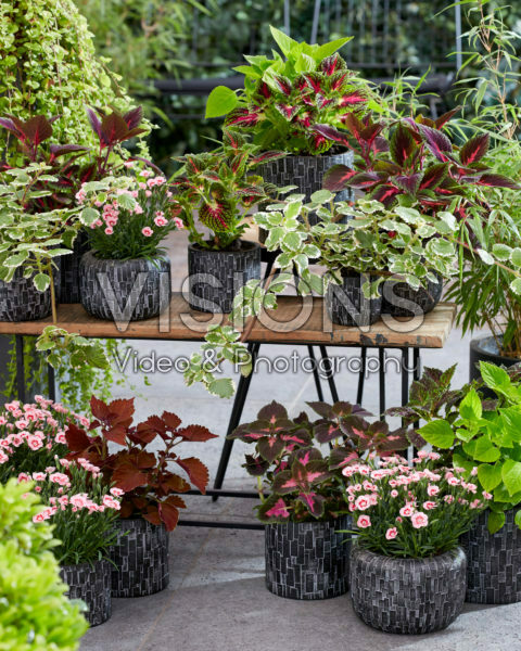 Collection of annuals and perennials