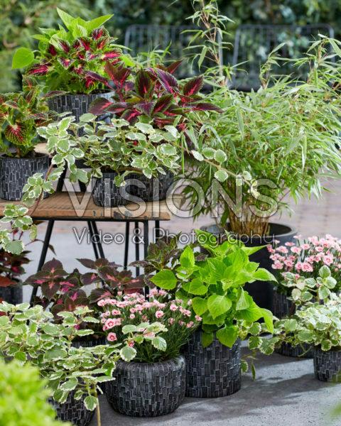 Collectie van eenjarigen en vaste planten