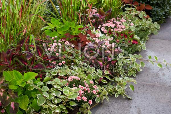 Eenjarigen en vaste planten in border