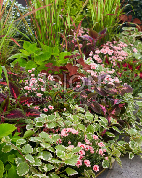 Annuals and perennials in border