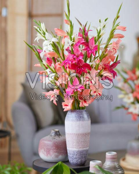 Gladiolus nanus gemengd boeket