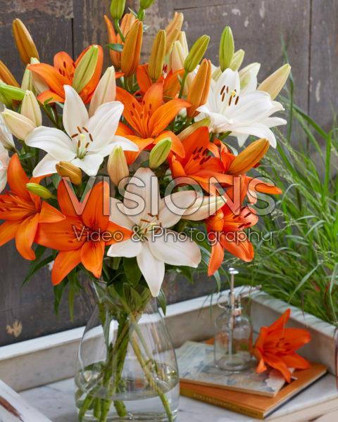 Lilium Snowdon, Orange Summer
