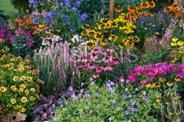 Vaste planten tuin
