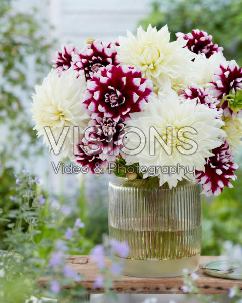 Dahlia bouquet; White Perfection, Mystery Day