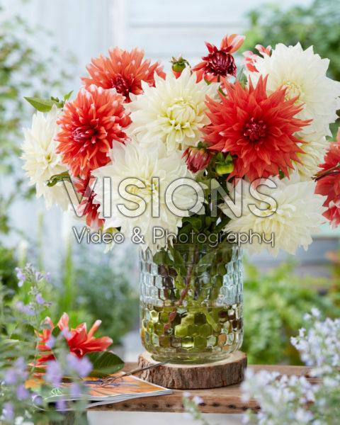 Dahlia bouquet; White Perfection, Color Spectacle