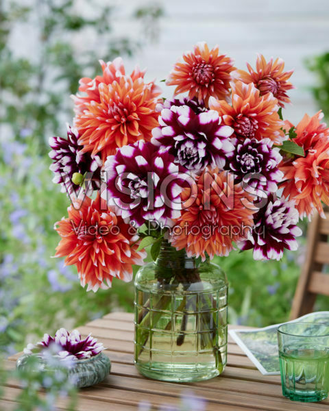 Dahlia bouquet; Mystery Day, Color Spectacle