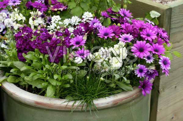 Annuals on pot
