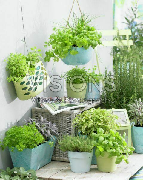 Herbs on patio