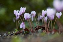 Delicate Nature